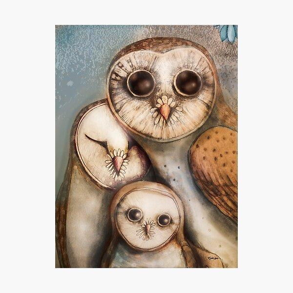 three wise owls Photographic Print
