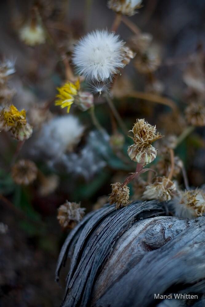 death and rebirth... by Mandi Whitten