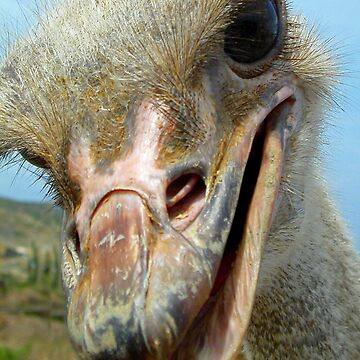 Curious Ostrich by kauisyndrome