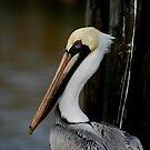 Harbor Friend by Jonicool