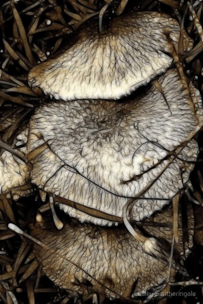 Fungi Fantasy in Sepia by Lesley Smitheringale