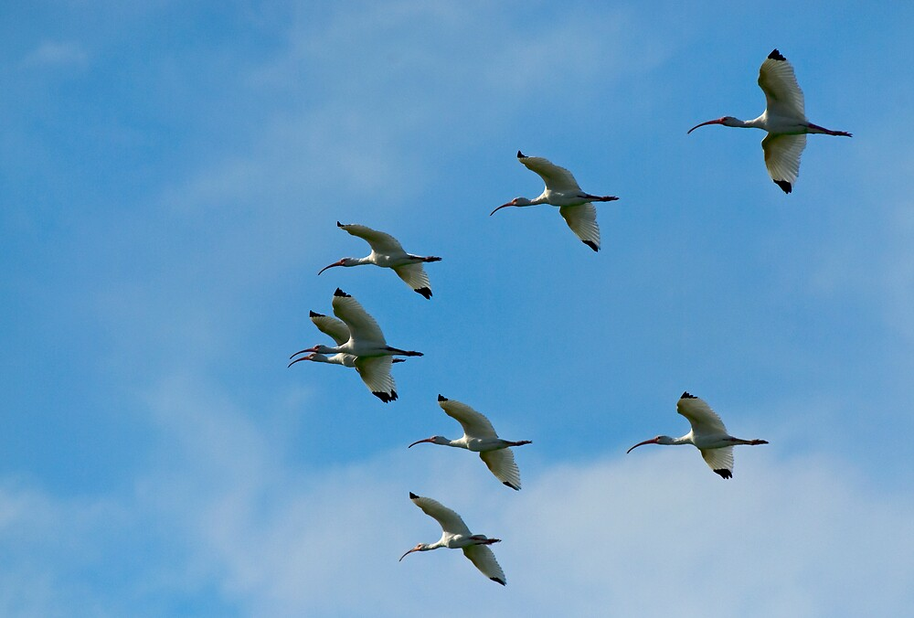 Ibis Overhead by Michael Wolf