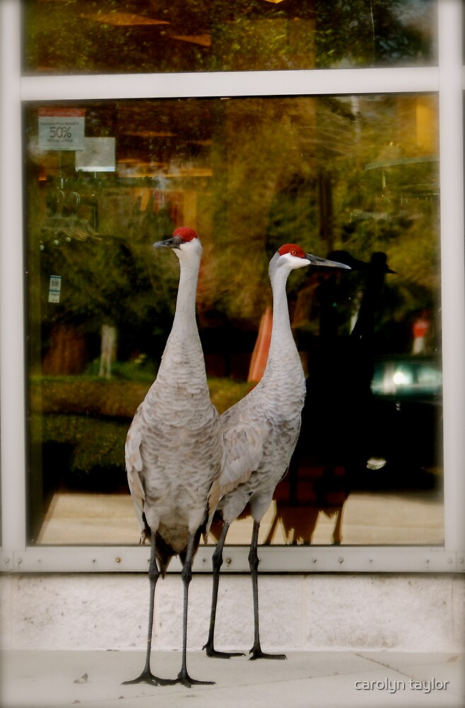 window shoppers by carolyn taylor