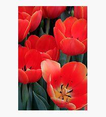 spring!! Photographic Print