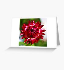 Floating Strawflower Greeting Card