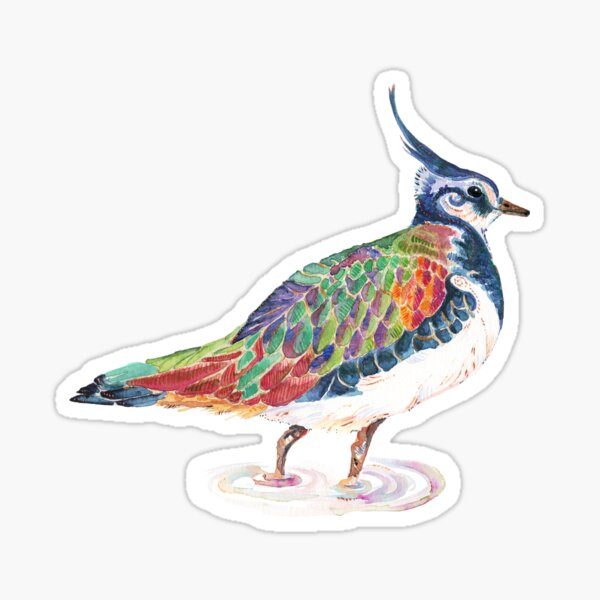 Lapwing - Watercolour Lapwing in bright colours Sticker