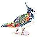 Lapwing - Watercolour Lapwing in bright colours by Jezhawk
