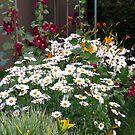 The Daisy Garden by Sandra Fortier