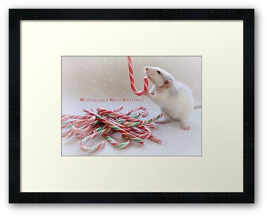 Saffie and Christmas :) by Ellen van Deelen