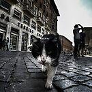 Street Cat by Nicklas Gustafsson