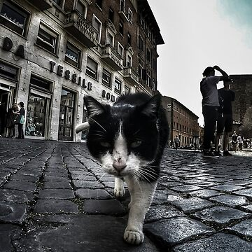 Street Cat de Nicklas81