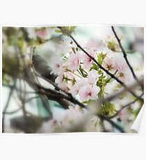 evening blossoms Poster