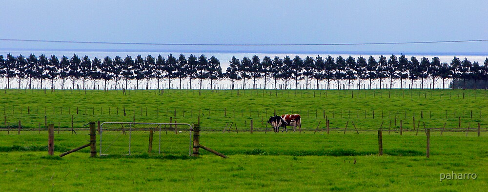 Cows - fences, trees and only 1 gate. by Peter Harrison