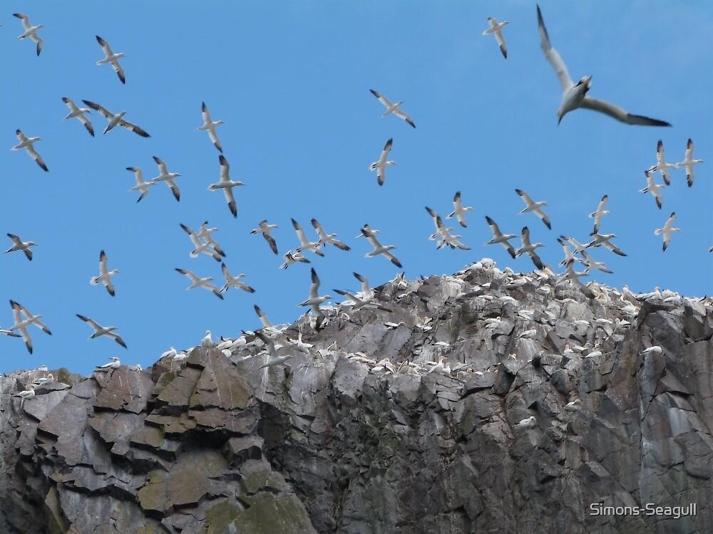 Gannets Take Flight by Simons-Seagull