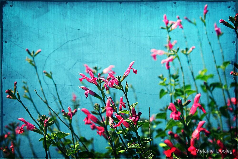 Pink Flowers by Melanie  Dooley