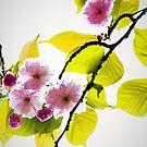 Sakura by Jessica Manelis