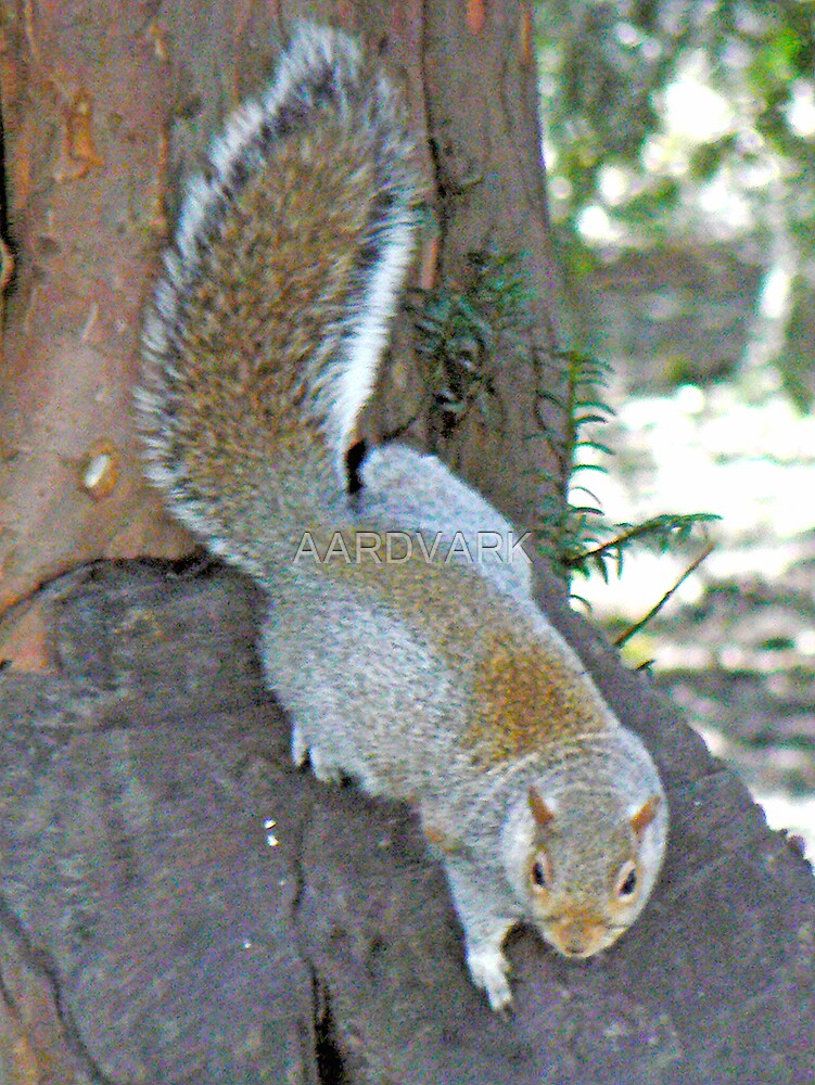 Ever Agile A Squirrel Descends A Tree by AARDVARK