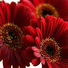 Red flowers by Dominic Parkes