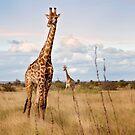 Giraffes on the Plains by vividpeach