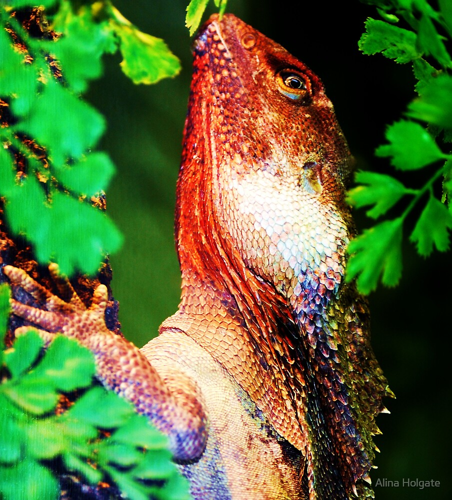 Frilled neck lizard by Alina Holgate