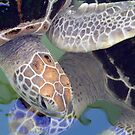 Turtle Love by Melissa Vowell