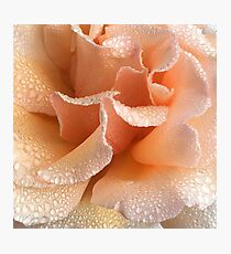 Rose Petal Bliss Photographic Print
