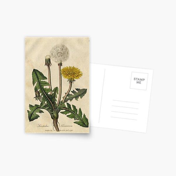 flores y semillas de un antiguo texto herbolario. Postal