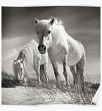Horses of Luskentyre  Poster