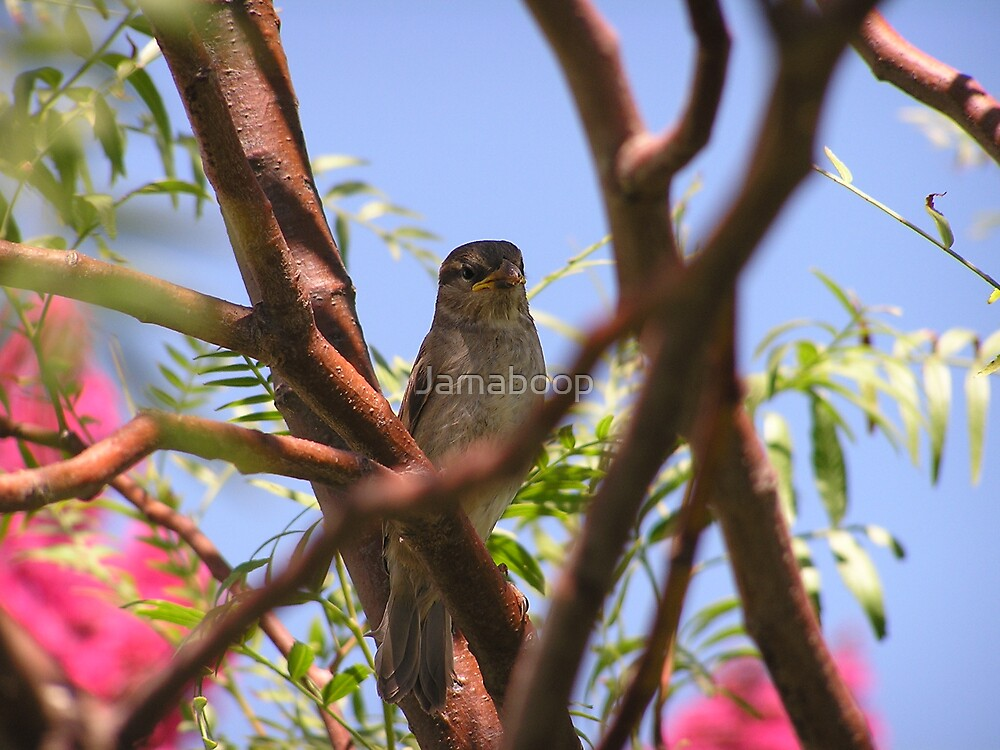 A bird in the tree by Jamaboop