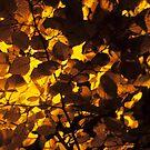 Autumn by Kasia Nowak