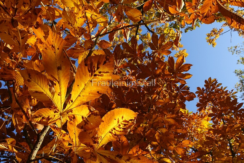 Colors of autumn by FrauleinimStall