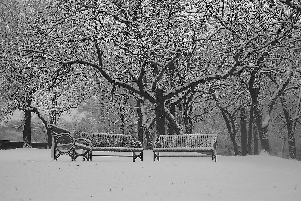 Winter in the Park by MadisonGal