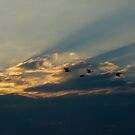 Birds in a Shadowed Sunset by Billlee