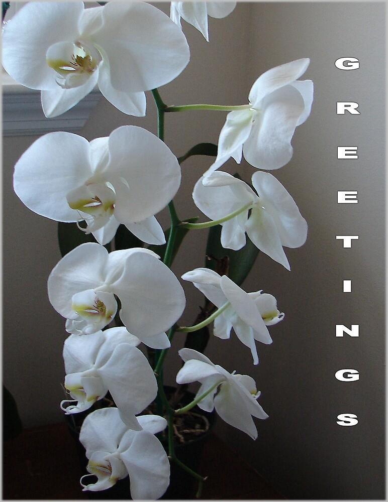 Beautiful Orchids by shadyuk