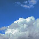 Free as a bird 1 by Sukhwinder Flora
