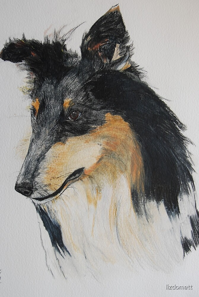 Rough Collie by lizdomett