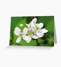 Wild Blackberry Blossoms Greeting Card