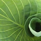 Inside a Hosta by Stephen Thomas