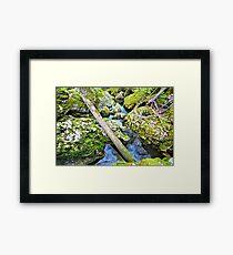Moine Tree Framed Print