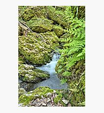 Ferns Of Moine Creek Photographic Print