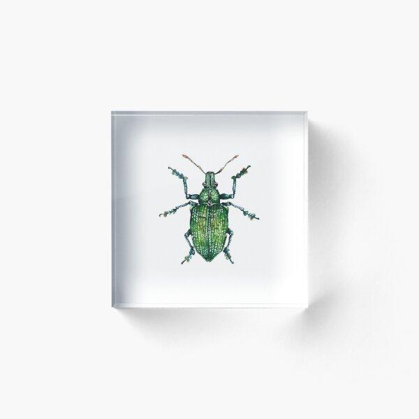Green Bug Acrylic Block