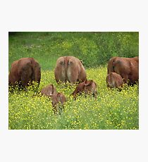 Buttercup Behinds Photographic Print