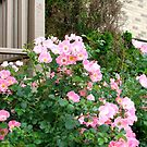 Pink Flowers Beside the Deck by SBrown