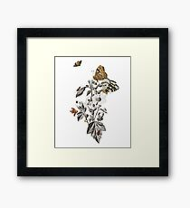 Insect Toile Framed Print