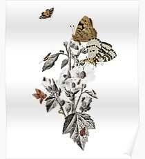 Insect Toile Poster