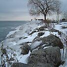 Winter by Tim Yuan