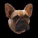 Bulldog t-shirt/sticker/prints/case/mug/cushion/duvet cover/leggings by hummingbirds