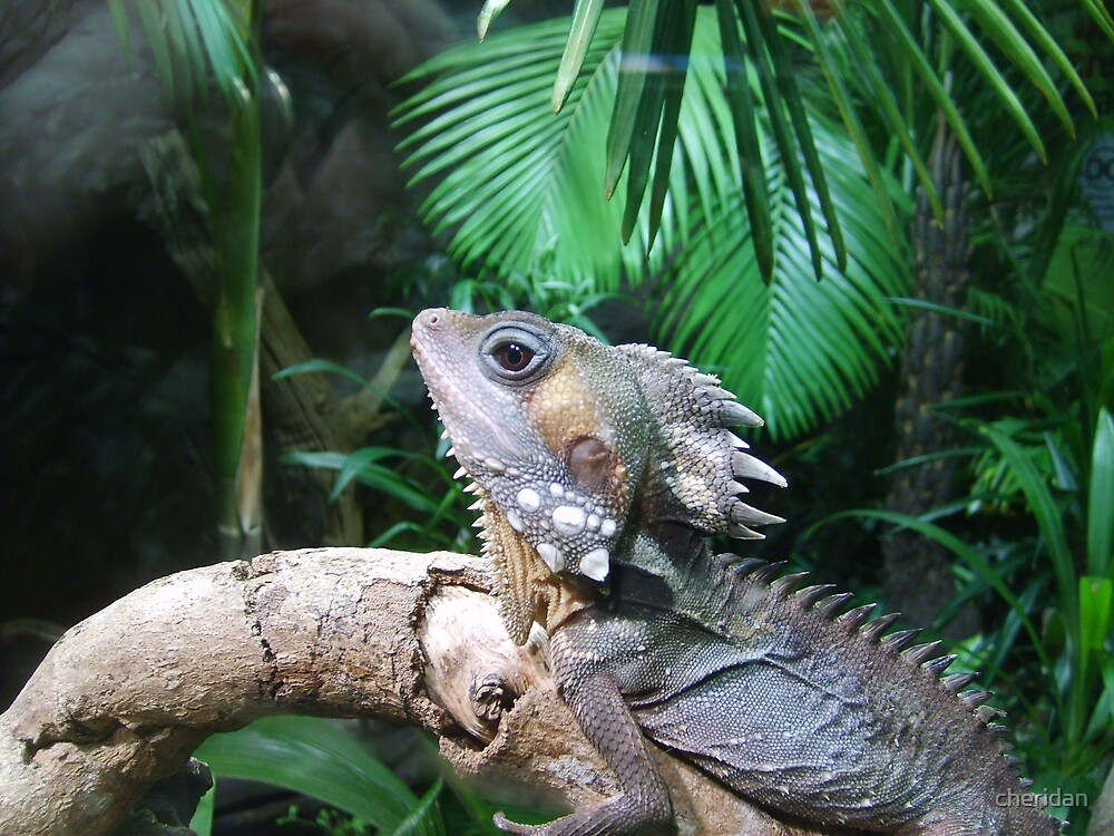 Mini dragon by cheridan