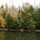 Fishing under the Birch by wolfllink
