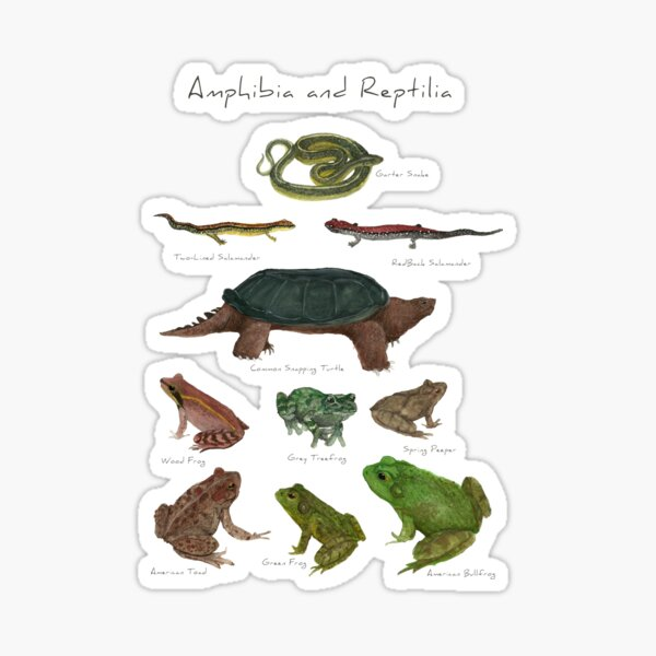 Amphibians and Reptiles Sticker